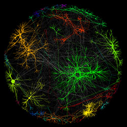 Image of a Genetic Network