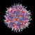 Image of an adeno-associated virus.