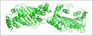 APOBEC enzyme structure.