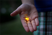 A glowing firefly sitting in a person's open palm.