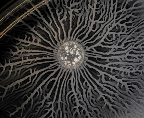 bacteria in a biofilm