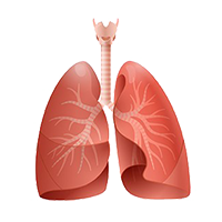 Illustration of outer lungs.