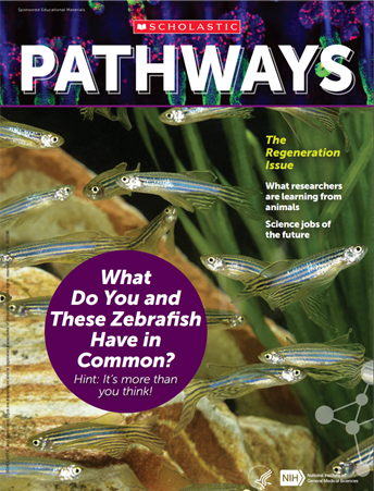 Cover of Pathways student magazine showing many zebrafish swimming underwater around grasslike plants, with the featured question: What do you and these zebrafish have in common?