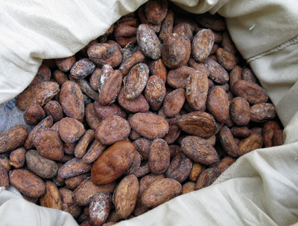 Raw cacao beans in a bag.