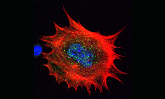 A cell moving in time, seen as a large red circle with spiked edges and a blue-and-green-flecked center.