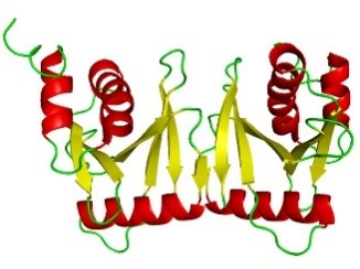 A roughly W-shaped protein structure made up of red spiral ribbons, flat yellow ribbons, and green strings.