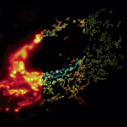 Composite image of mitochondria in a cell. Credit: Xiaowei Zhuang laboratory, Howard Hughes Medical Institute, Harvard University.