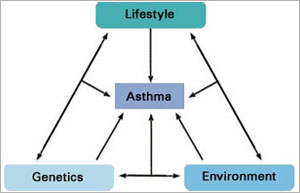 Illustration showing the factors that may contribute to asthma.