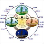 Illustration of circadian rhythm.