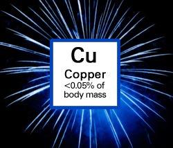 Copper. <0.05% of body mass.